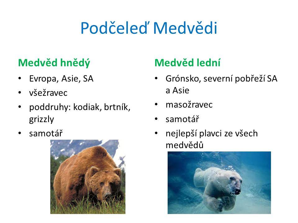 Podčeleď Medvědi Medvěd hnědý Medvěd lední Evropa, Asie, SA všežravec