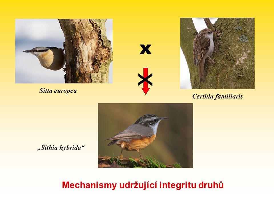 x x Mechanismy udržující integritu druhů Sitta europea
