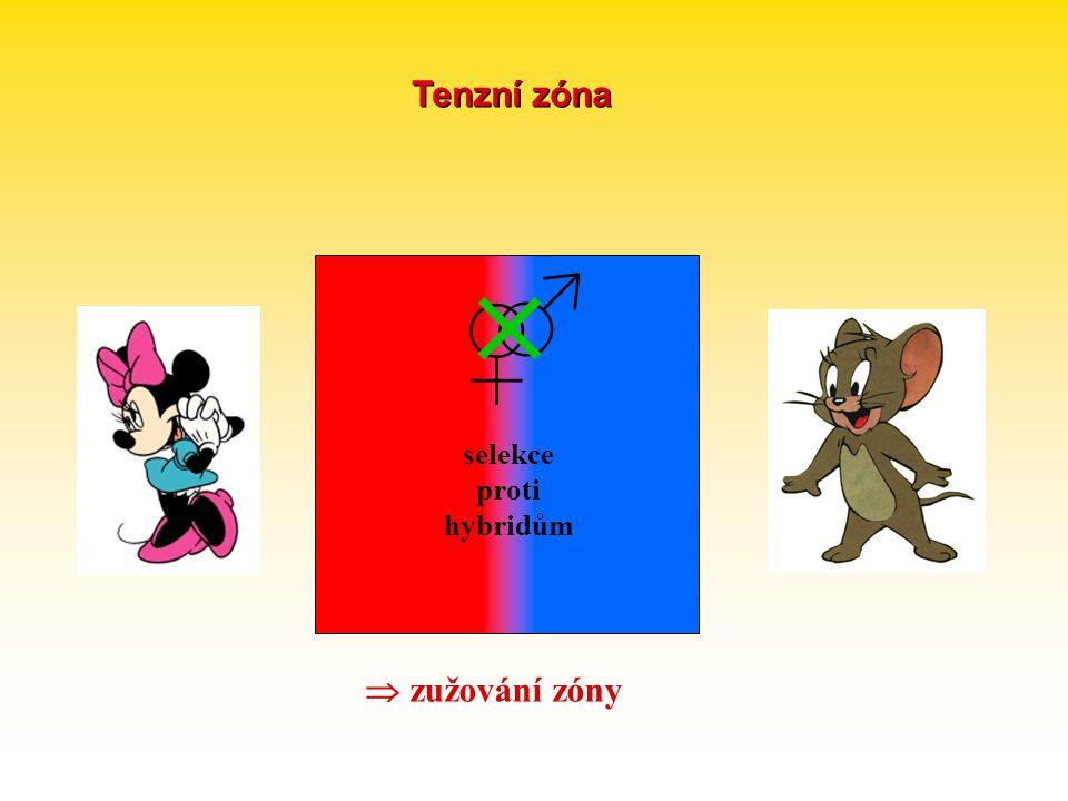 Tenzní zóna  ♂ ♀ selekce proti hybridům  zužování zóny