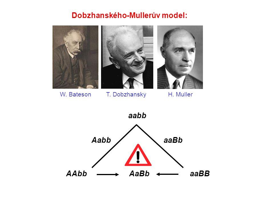 Dobzhanského-Mullerův model: