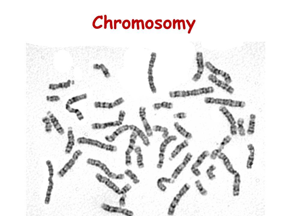 Chromosomy 26