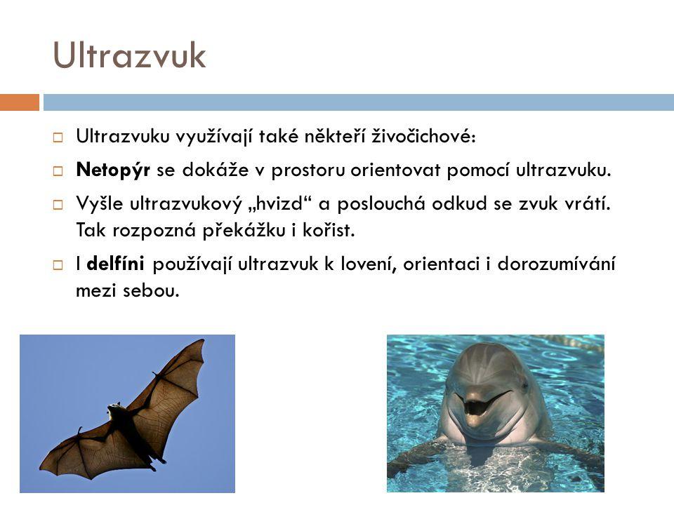 Ultrazvuk Ultrazvuku využívají také někteří živočichové: