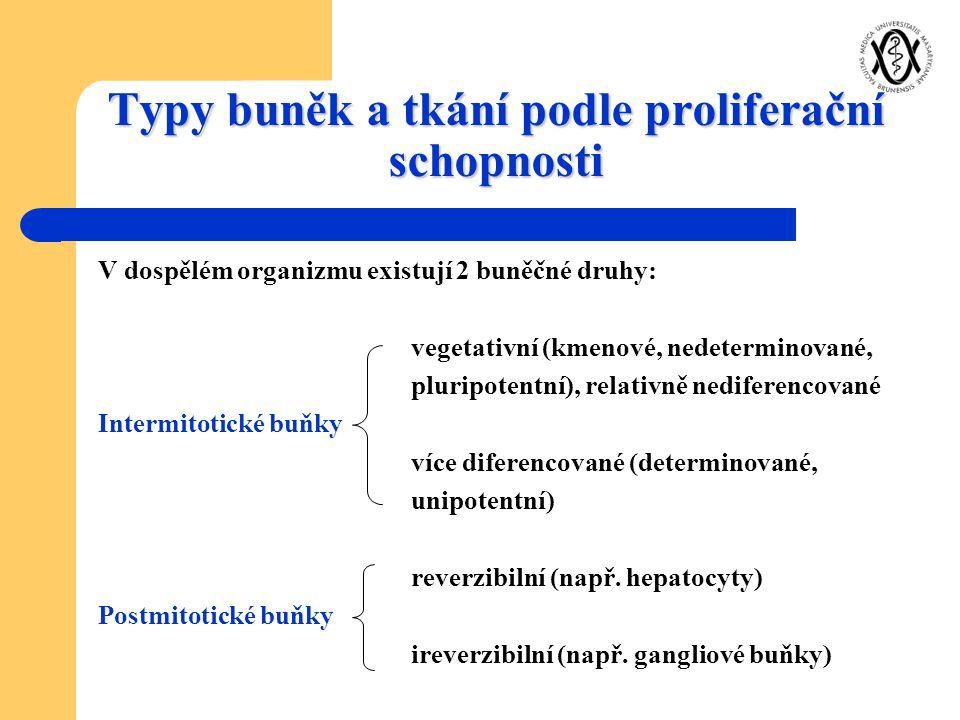 Typy buněk a tkání podle proliferační schopnosti