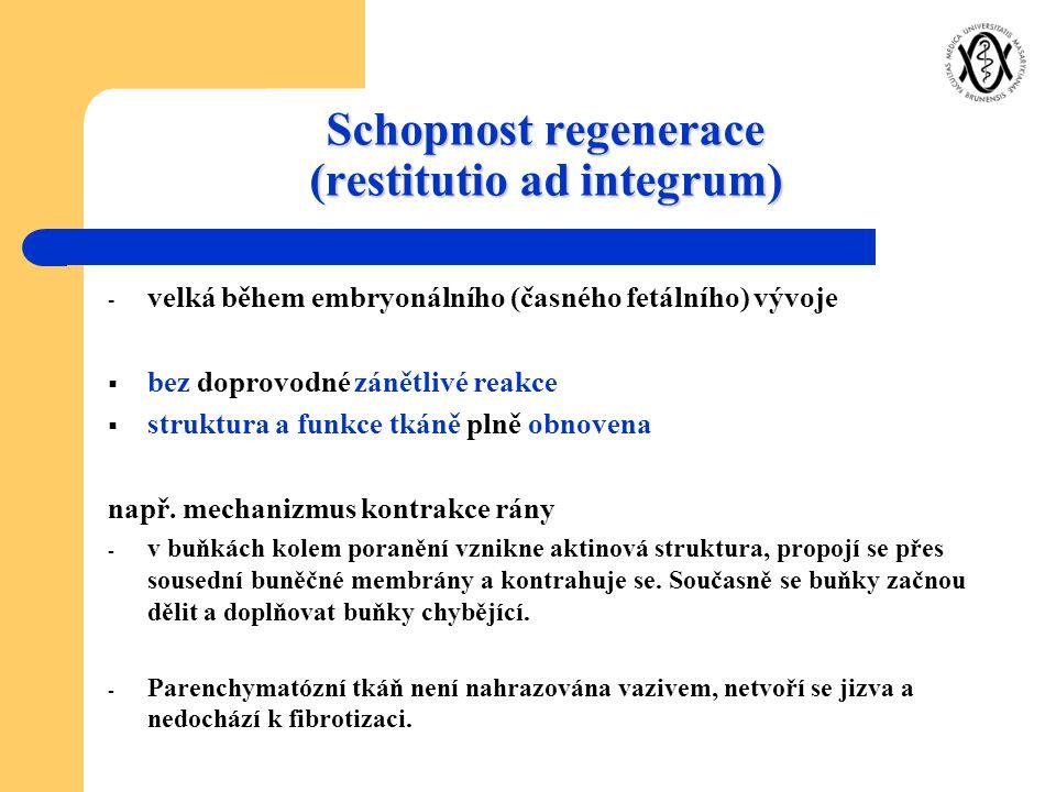 Schopnost regenerace (restitutio ad integrum)