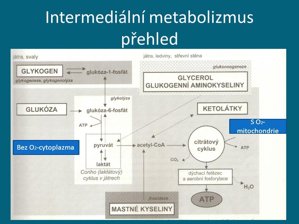 Intermediální metabolizmus přehled