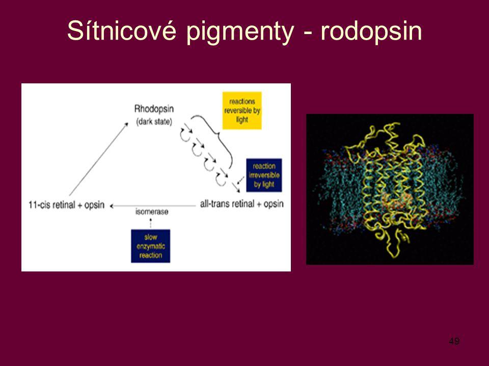 Sítnicové pigmenty - rodopsin