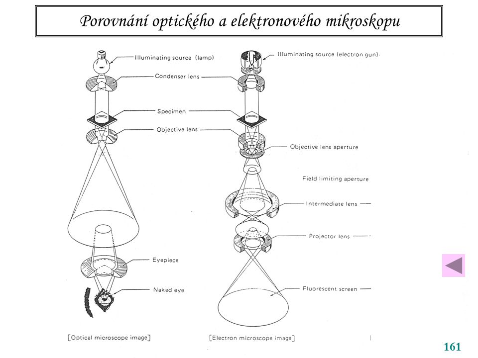 Porovnání optického a elektronového mikroskopu