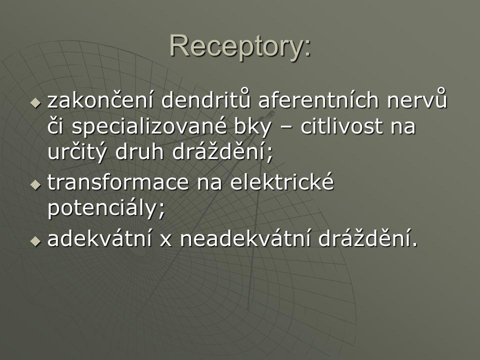 Receptory: zakončení dendritů aferentních nervů či specializované bky – citlivost na určitý druh dráždění;