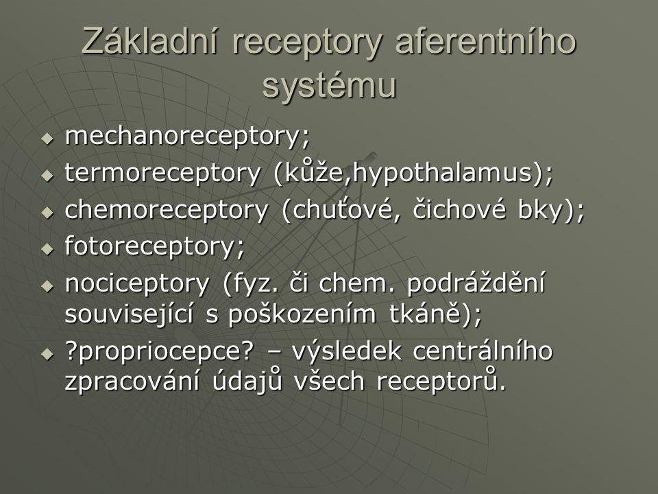 Základní receptory aferentního systému