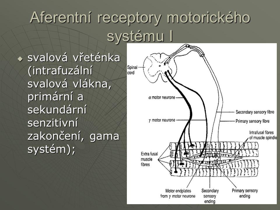 Aferentní receptory motorického systému I
