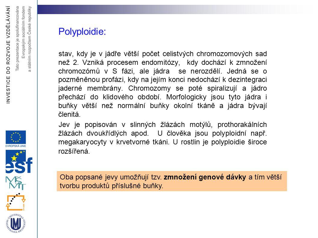 Polyploidie: