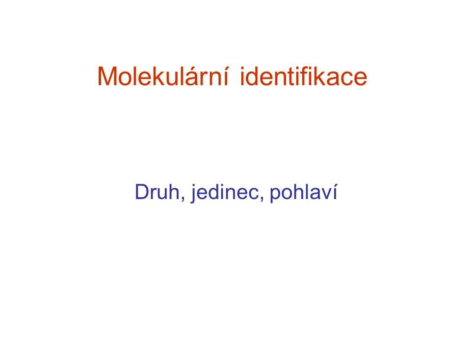 Molekulární identifikace