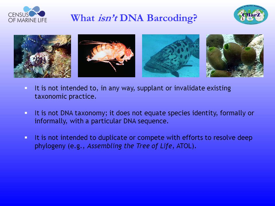 What isn't DNA Barcoding
