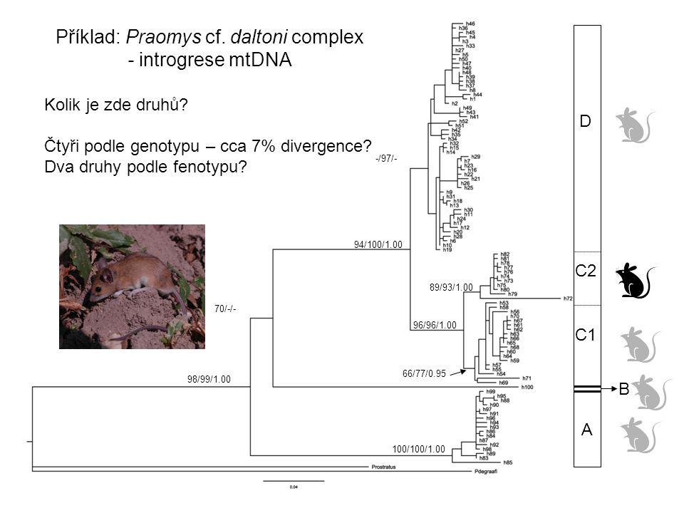 Příklad: Praomys cf. daltoni complex - introgrese mtDNA