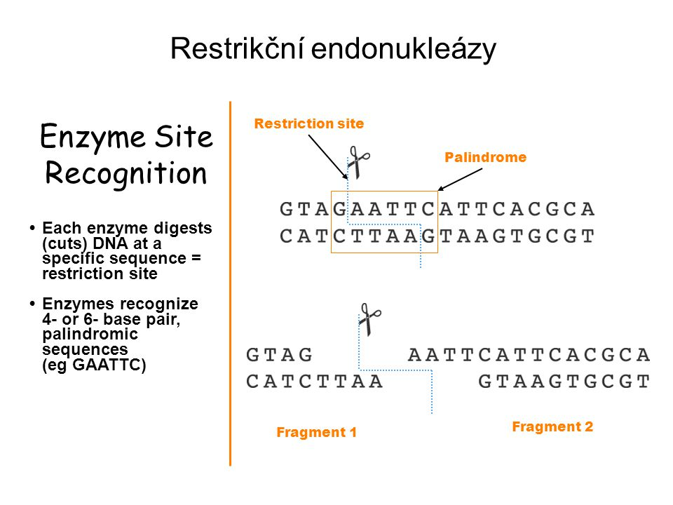 Enzyme Site Recognition