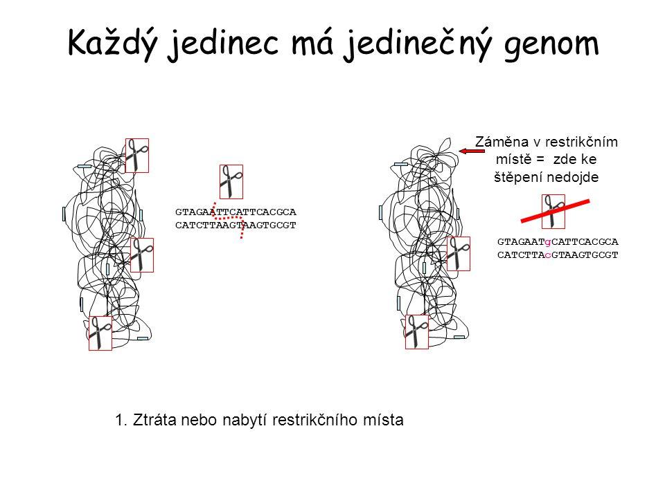 Každý jedinec má jedinečný genom