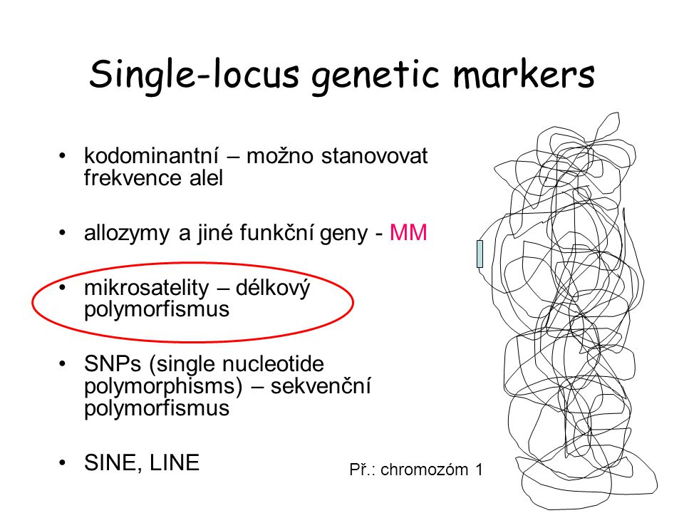 Single-locus genetic markers