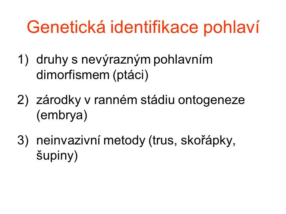 Genetická identifikace pohlaví