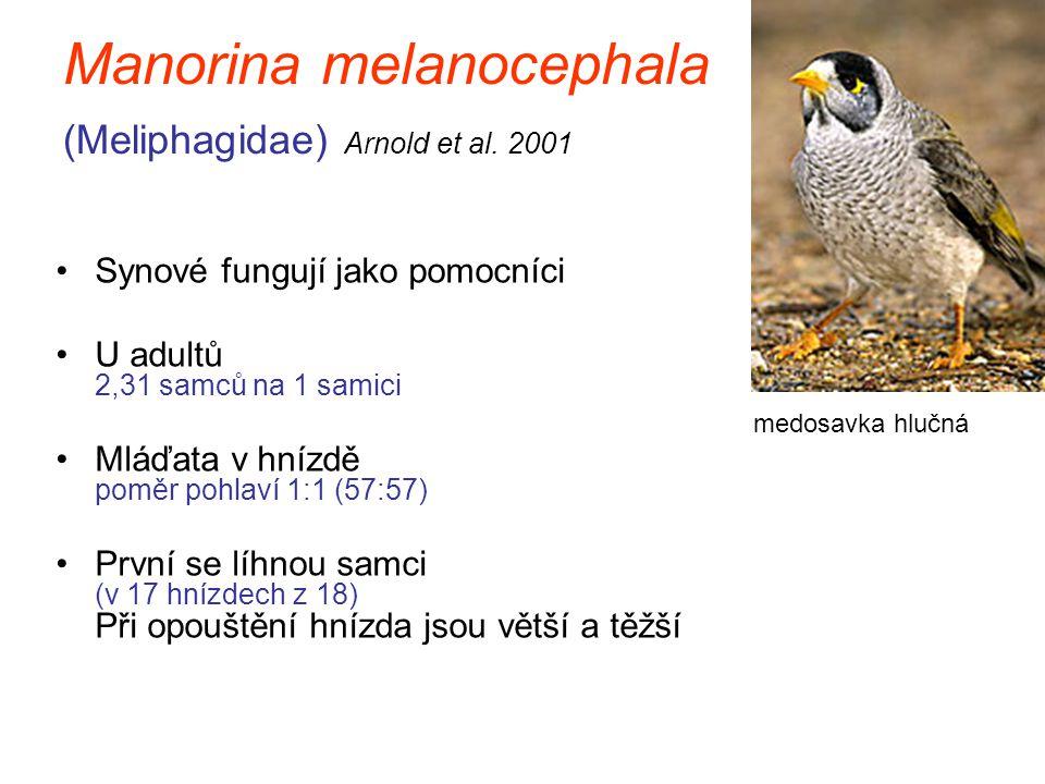 Manorina melanocephala (Meliphagidae) Arnold et al. 2001