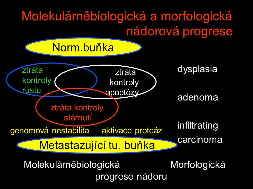 Molekulárněbiologická a morfologická nádorová progrese