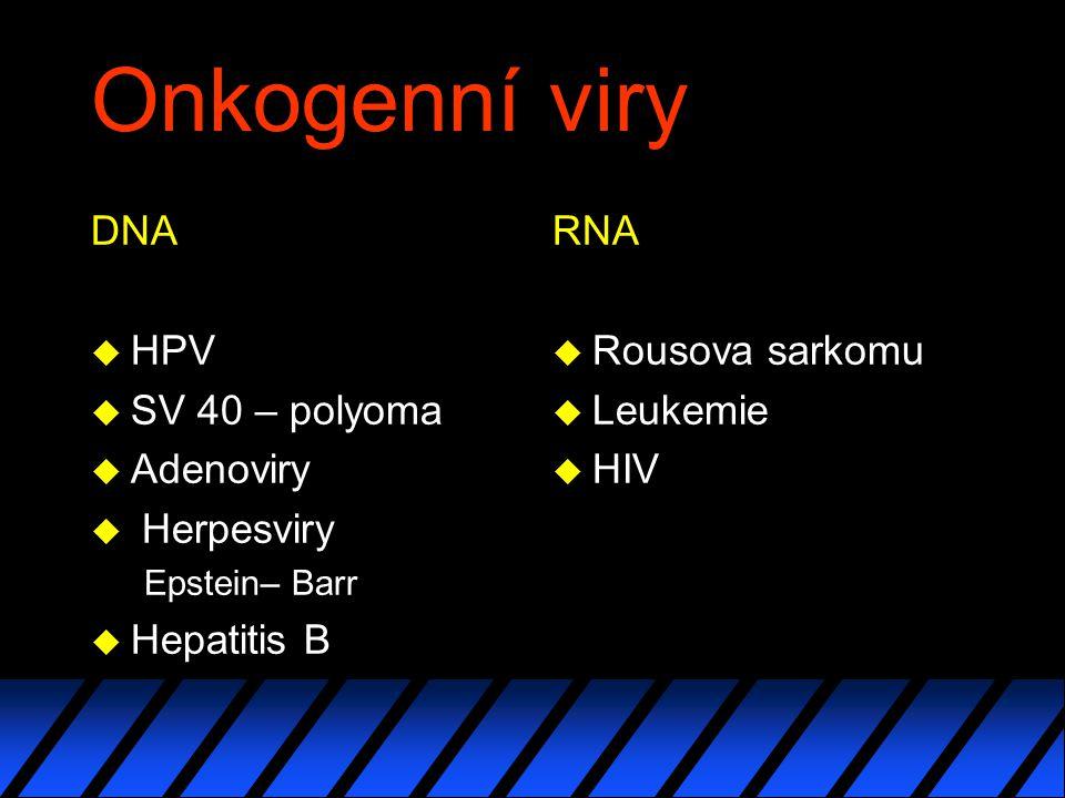 Onkogenní viry DNA HPV SV 40 – polyoma Adenoviry Herpesviry
