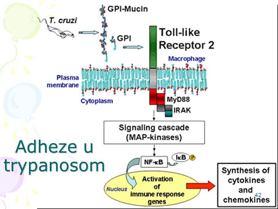 Adheze u trypanosom