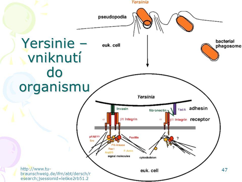 Yersinie – vniknutí do organismu