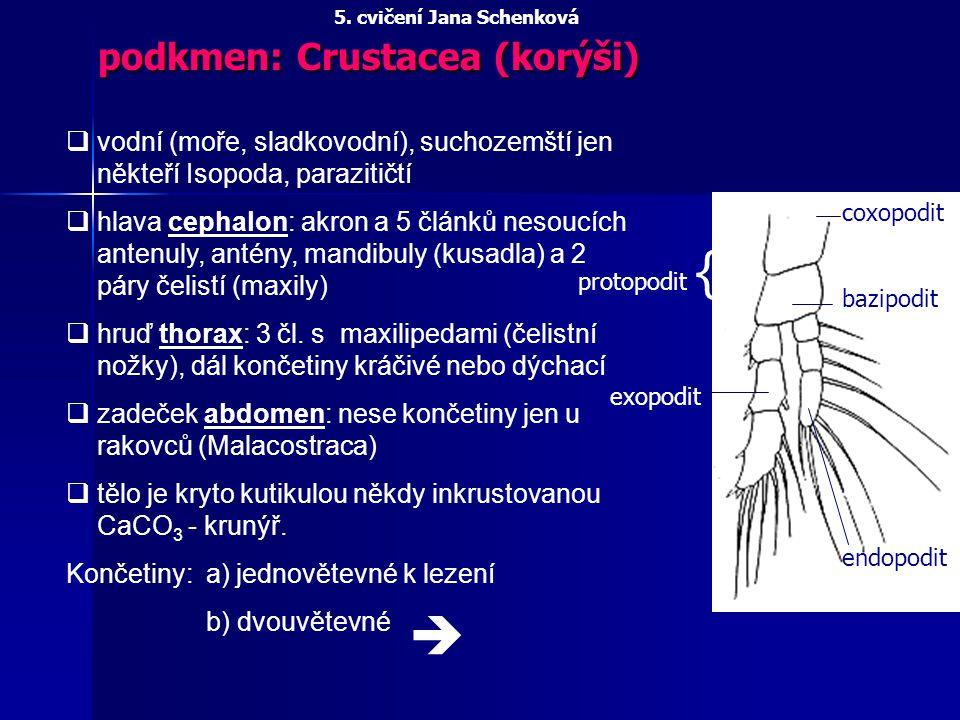 podkmen: Crustacea (korýši)