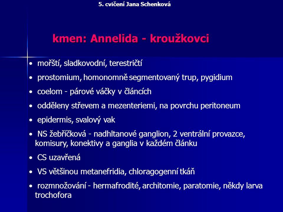 kmen: Annelida - kroužkovci