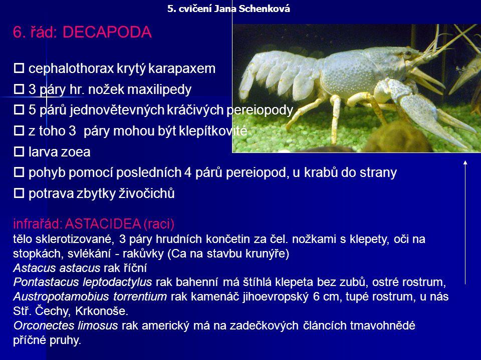 5. cvičení Jana Schenková