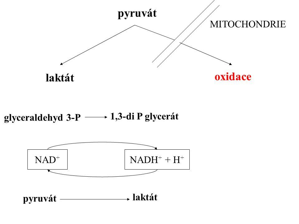 pyruvát laktát oxidace