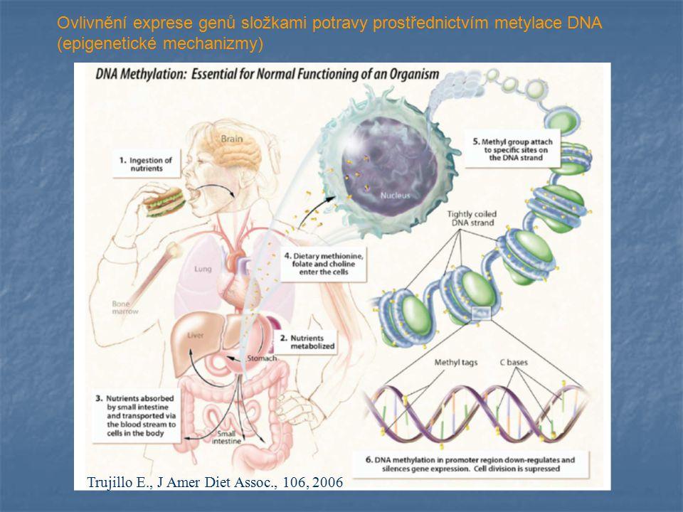 Ovlivnění exprese genů složkami potravy prostřednictvím metylace DNA (epigenetické mechanizmy)