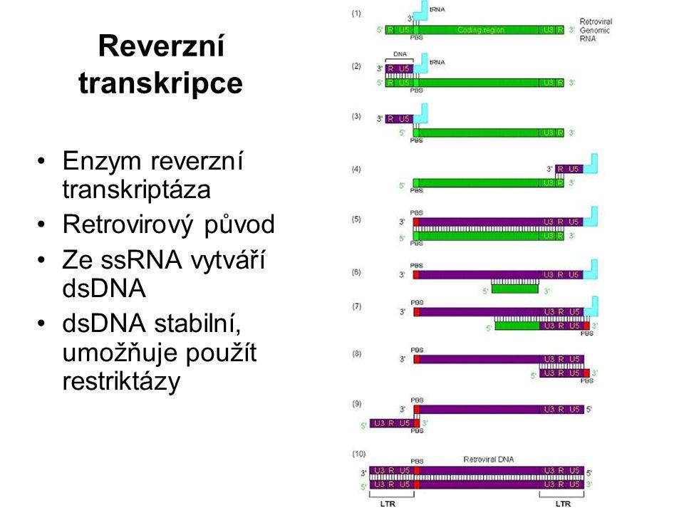 Reverzní transkripce Enzym reverzní transkriptáza Retrovirový původ