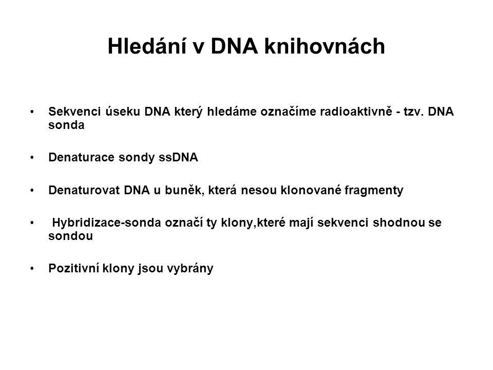 Hledání v DNA knihovnách