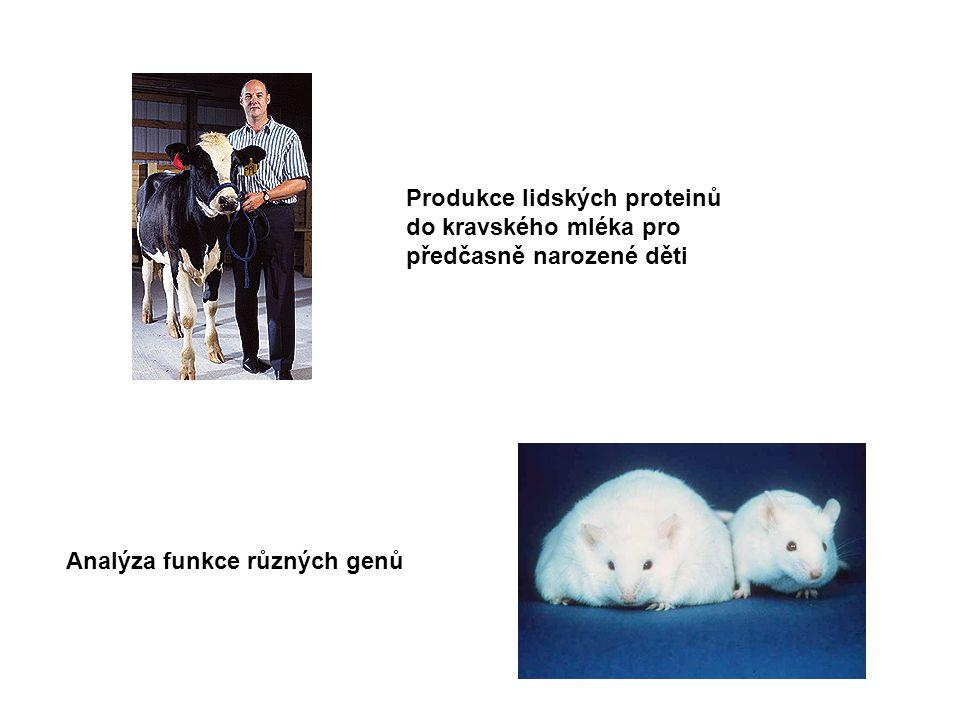 Produkce lidských proteinů do kravského mléka pro předčasně narozené děti