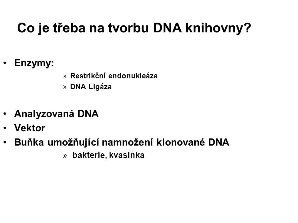Co je třeba na tvorbu DNA knihovny