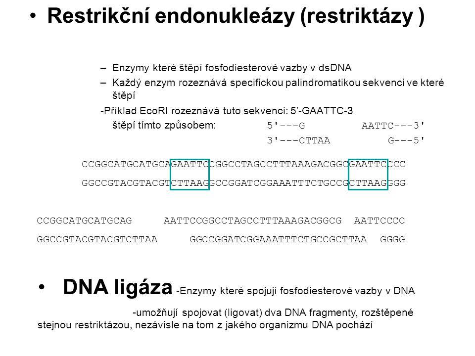 Restrikční endonukleázy (restriktázy )