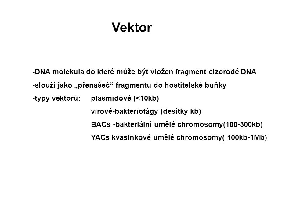 Vektor -DNA molekula do které může být vložen fragment cizorodé DNA