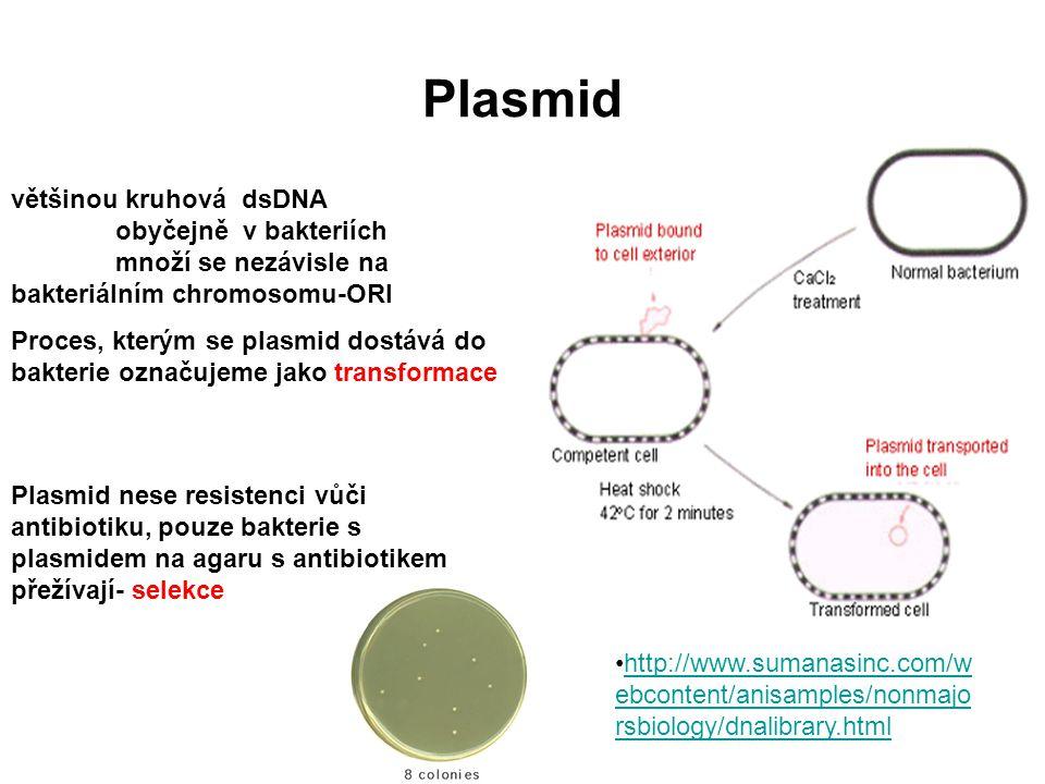 Plasmid většinou kruhová dsDNA obyčejně v bakteriích