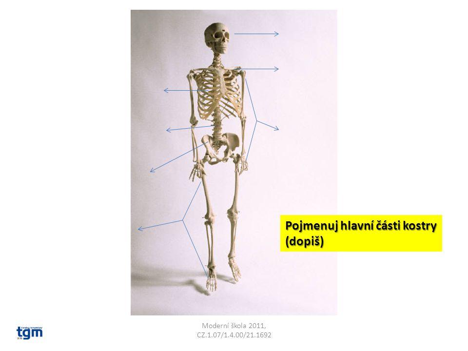 Pojmenuj hlavní části kostry (dopiš)