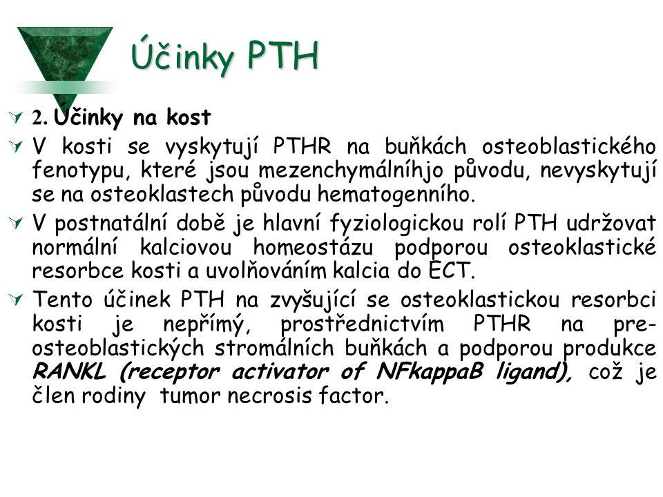 Účinky PTH 2. Účinky na kost