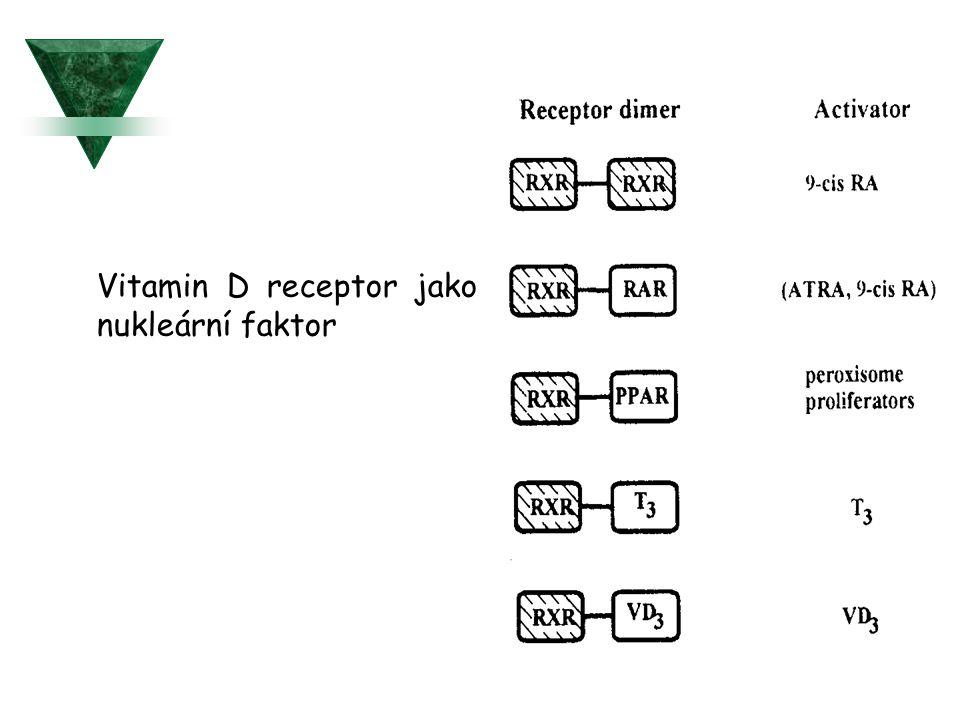 Vitamin D receptor jako nukleární faktor
