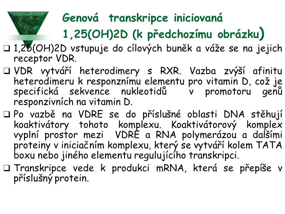 Genová transkripce iniciovaná 1,25(OH)2D (k předchozímu obrázku)