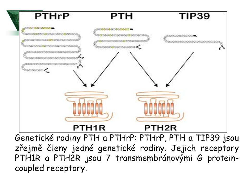 Genetické rodiny PTH a PTHrP: PTHrP, PTH a TIP39 jsou zřejmě členy jedné genetické rodiny.
