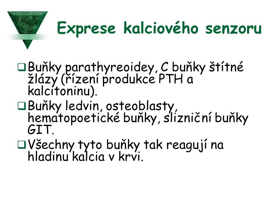 Exprese kalciového senzoru