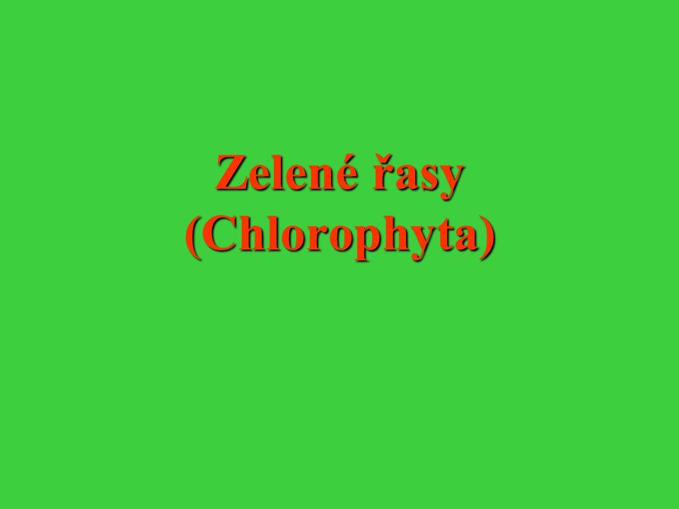 Zelené řasy (Chlorophyta)
