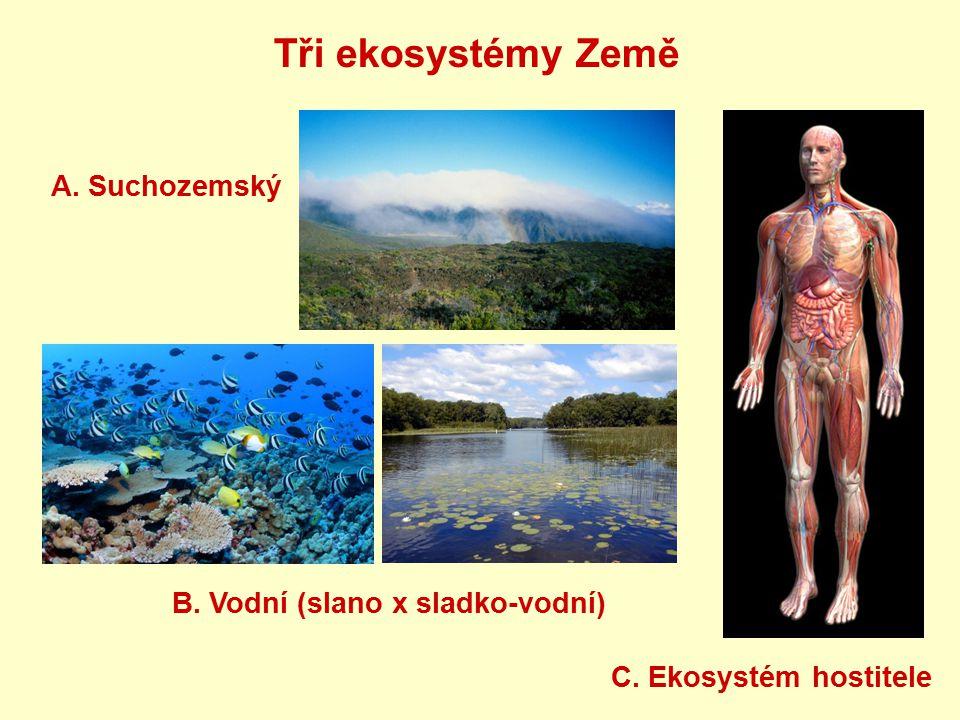 Tři ekosystémy Země A. Suchozemský B. Vodní (slano x sladko-vodní)