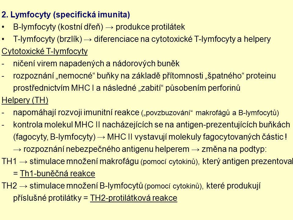 2. Lymfocyty (specifická imunita)