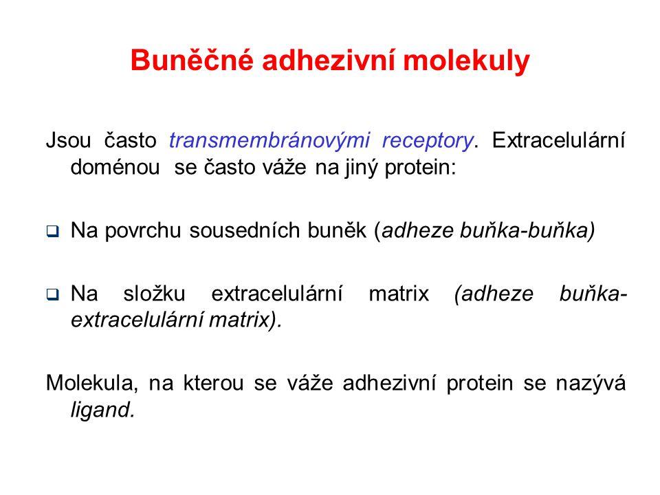 Buněčné adhezivní molekuly