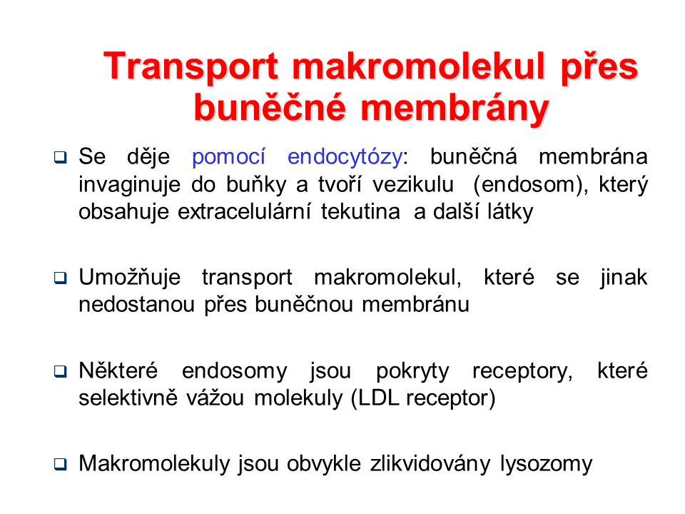 Transport makromolekul přes buněčné membrány